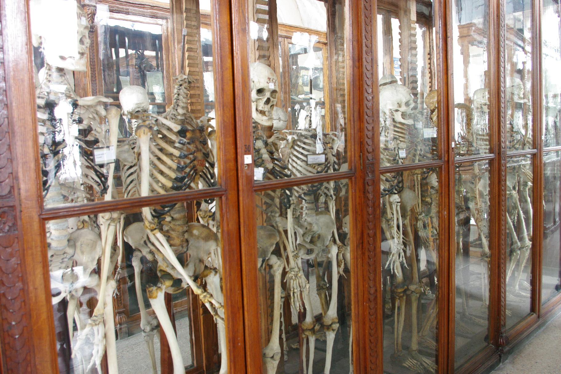 Музей кафедри анатомії людини готується до візиту поважних гостей